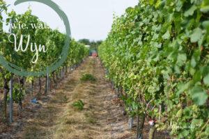 wie, wat, wijn: wat is terroir